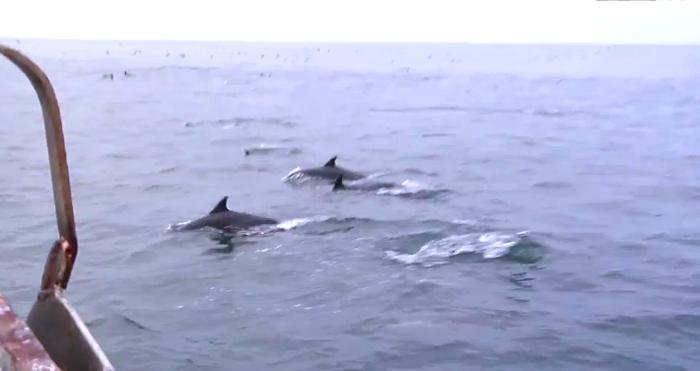 delfiner california