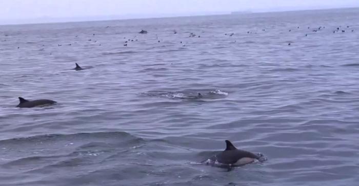 delfiner california los angeles