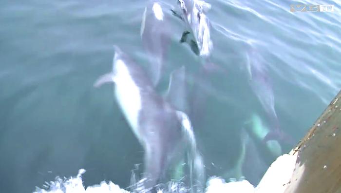delfiner los angeles 2
