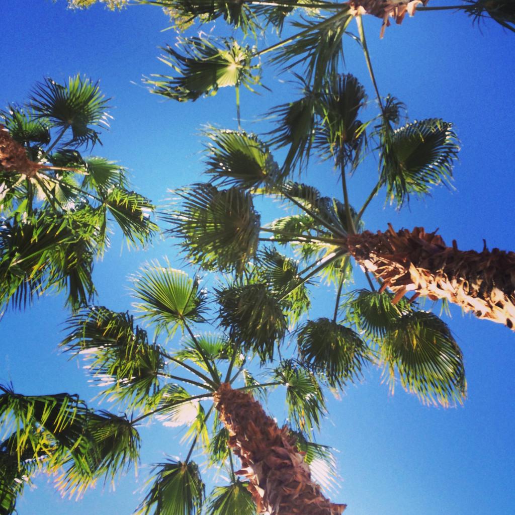 palmer i vegas