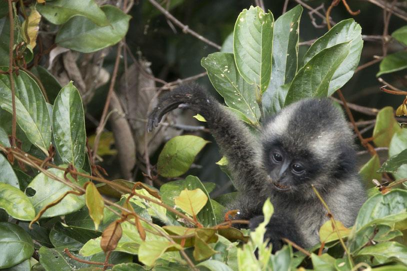 INFANTGIBBONWEB, gibbons experience, reisetips, norsk reiseblogg