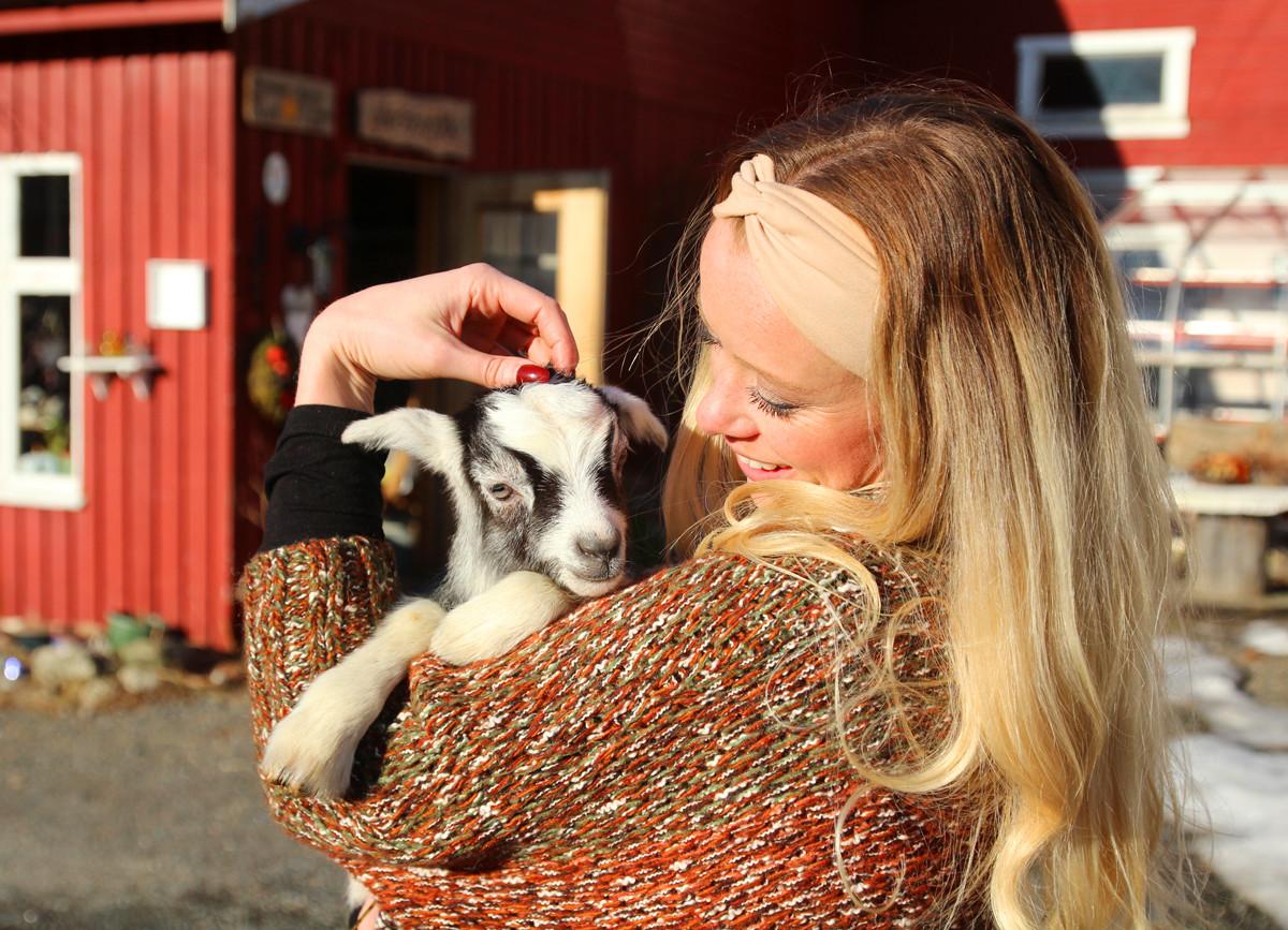 aaland gård lofoten cheese goats