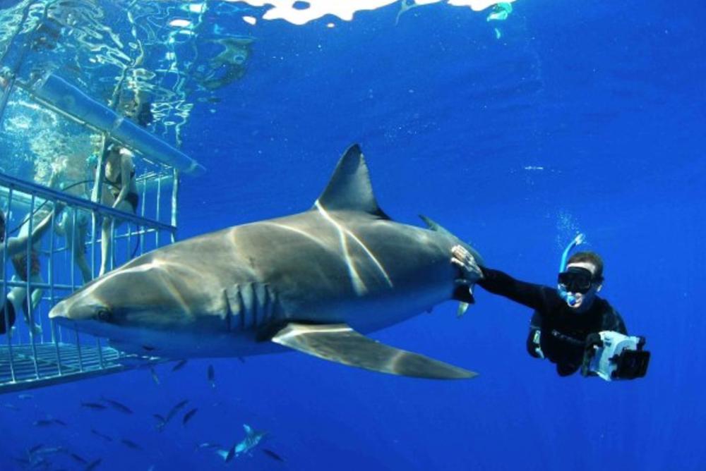 andy brandy casagrande sharkweek