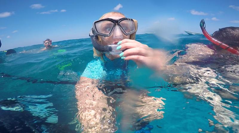 haidykk bahamas bimini