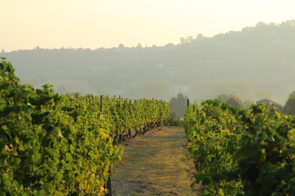 italy winyards piemonte