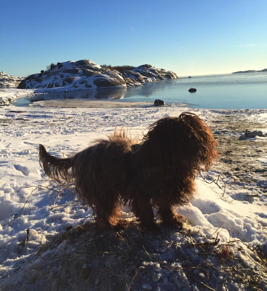 kul hund i snøen stavern larvik