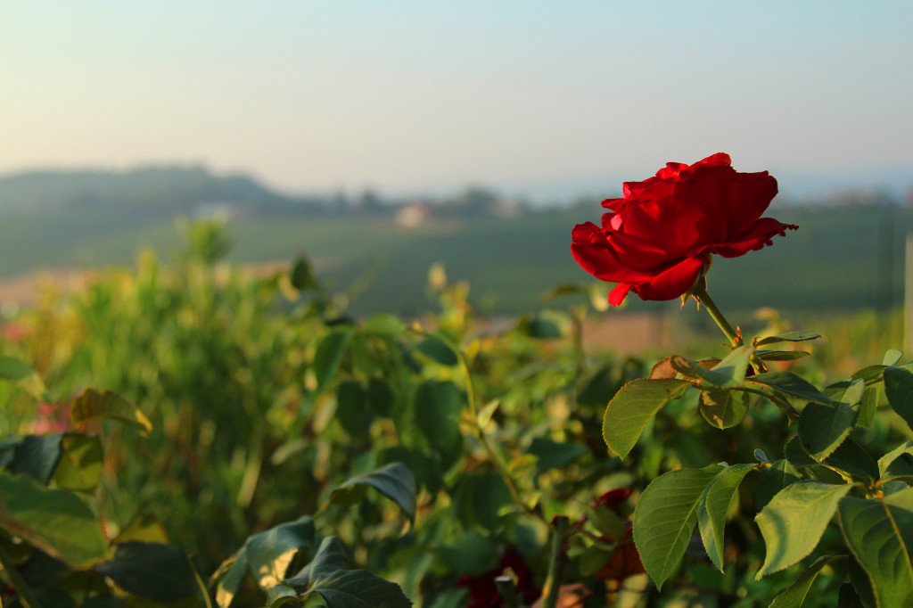 piemonte italia hotell reisetips