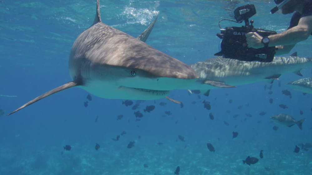 swimming with sharks in bahamas travel