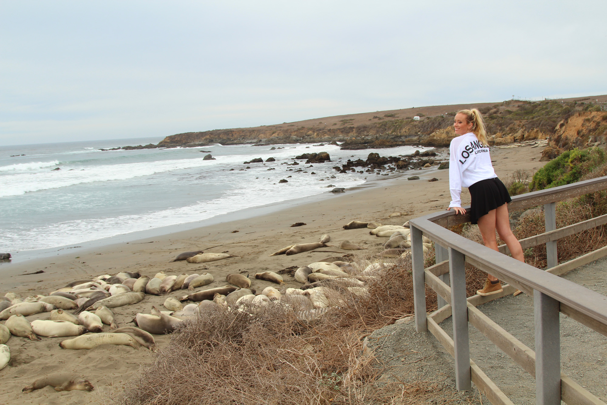 the best stop to see sea elephants in california  low