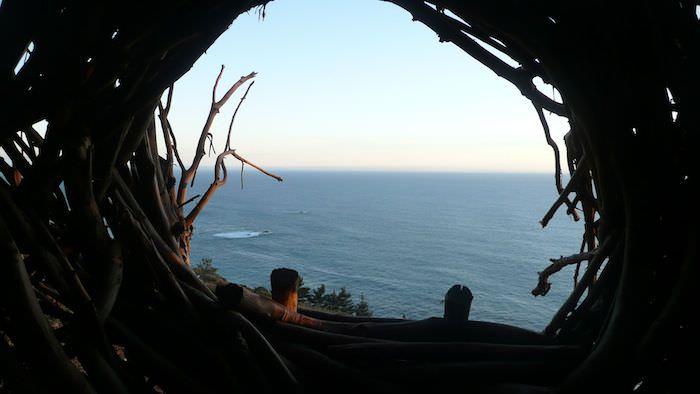 treebones-nest1